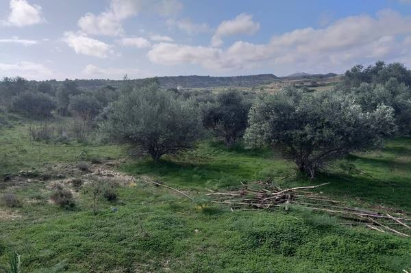LAND FOR SALE IN CYPRUS MAZOTOS